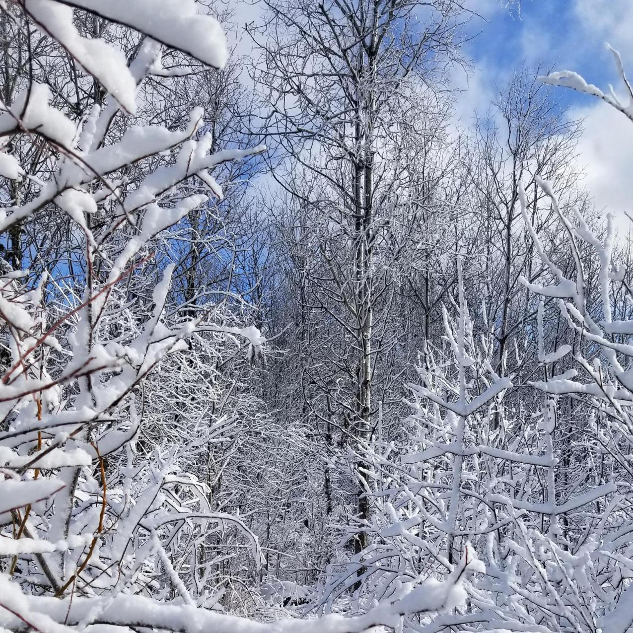 Property trees in winter